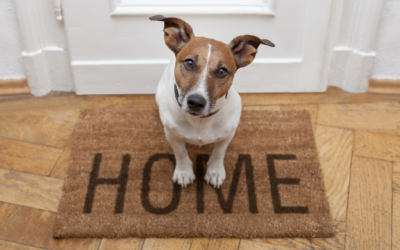 Got Pets? Tips for Making Your Home Pet Friendly
